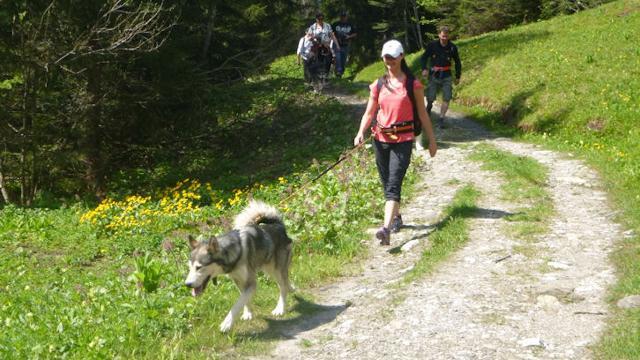 Lehrreicher Besuch im Husky Camp mit fast 30 Schlitt...